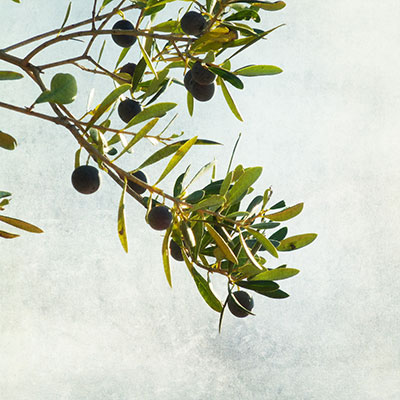 Olive Branch by Nick Kenrick