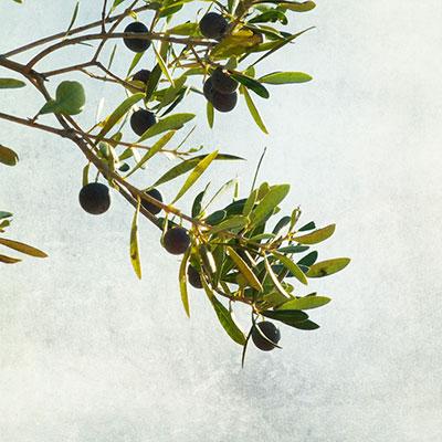 Olive Branch by Nick Kenrick
