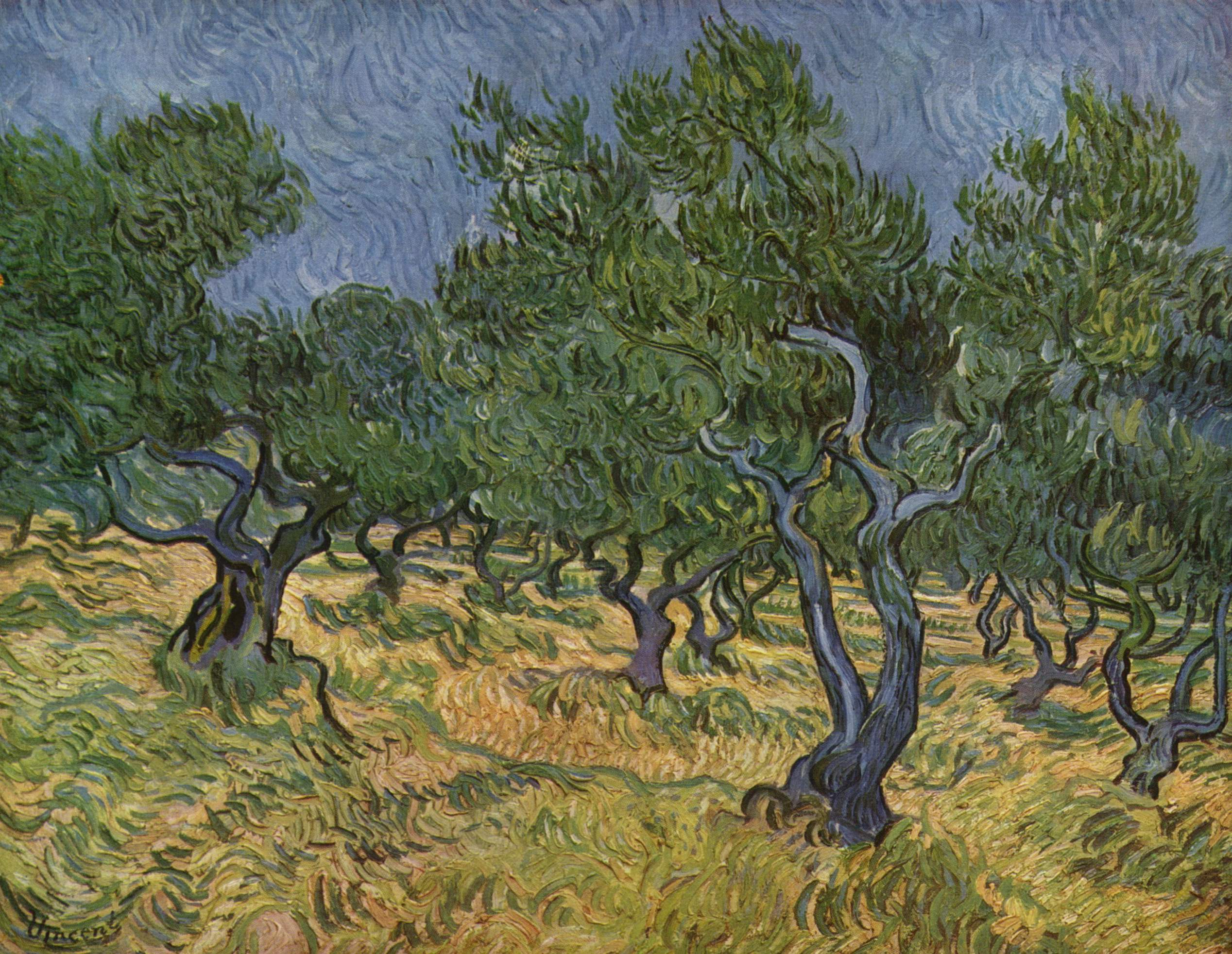 Olive Orchard by Vincent van Gogh.