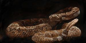 Rattlesnake by James Fullmer