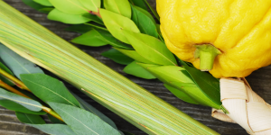 The Four Species used in the festivities of Sukkot