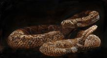 Rattlesnake by James Fullmer